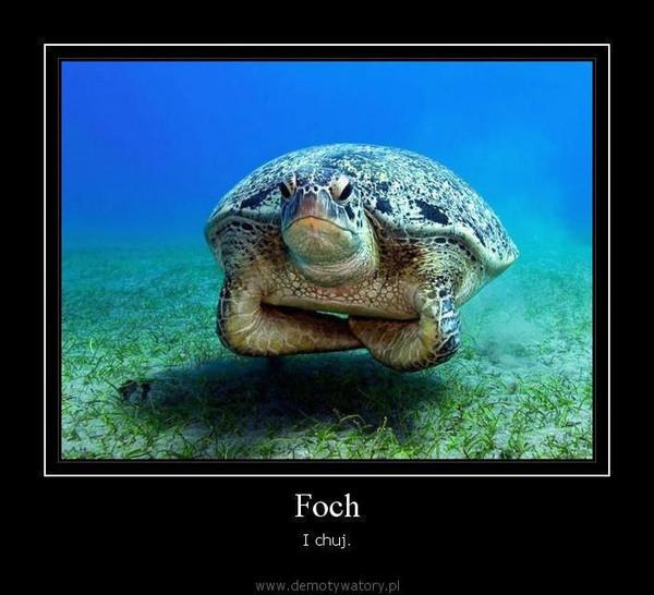 Foch – I chuj.