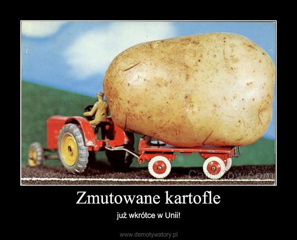 Zmutowane kartofle – już wkrótce w Unii!