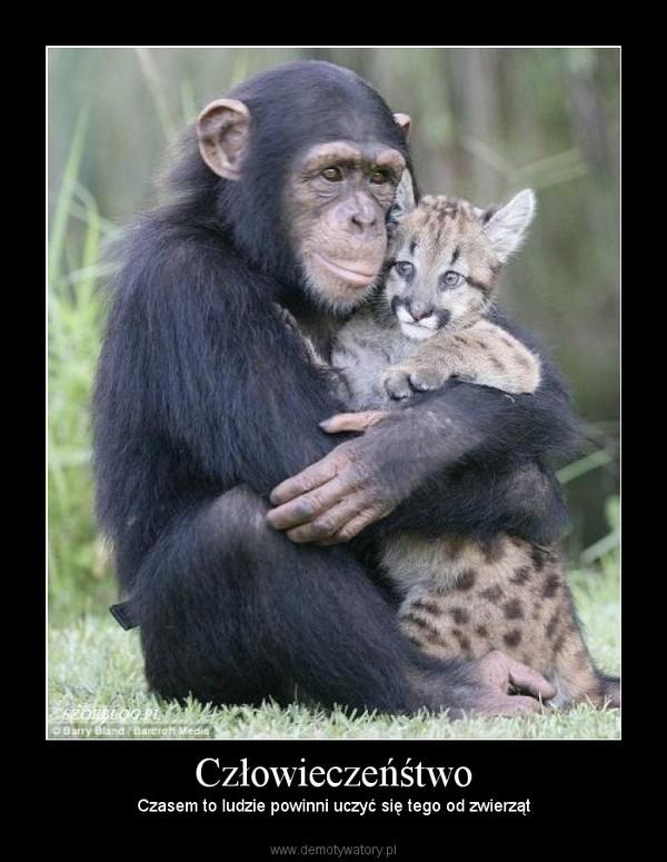 Człowieczeńśtwo – Czasem to ludzie powinni uczyć się tego od zwierząt