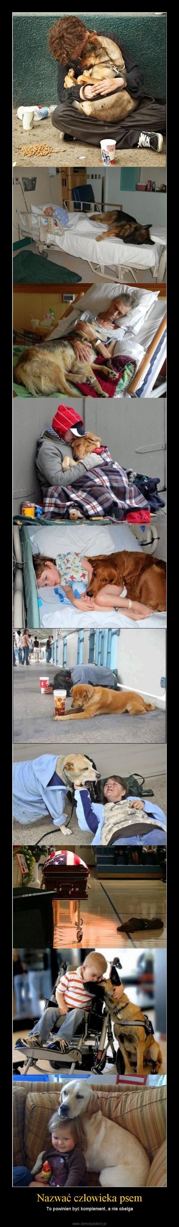 Nazwać człowieka psem – To powinien być komplement, a nie obelga