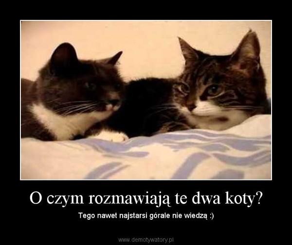 O czym rozmawiają te dwa koty? – Tego nawet najstarsi górale nie wiedzą :)