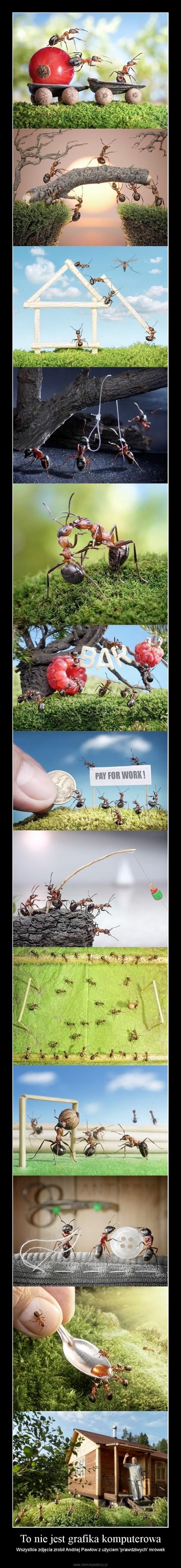 To nie jest grafika komputerowa – Wszystkie zdjęcia zrobił Andriej Pawłow z użyciem 'prawdziwych' mrówek