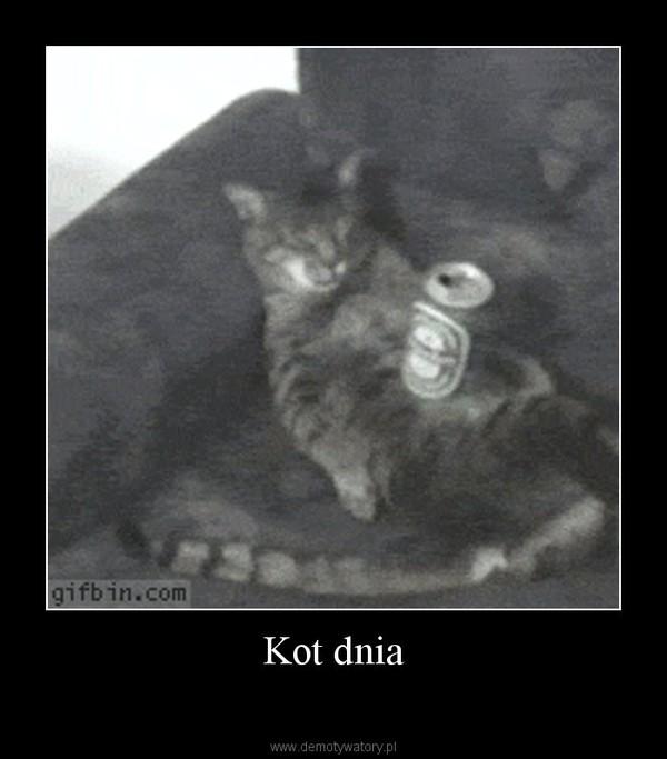 Kot dnia –