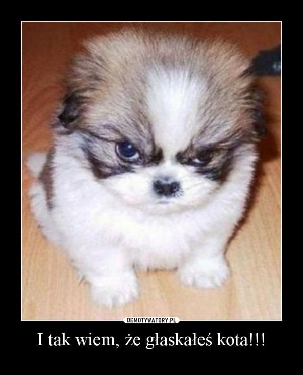 I tak wiem, że głaskałeś kota!!! –