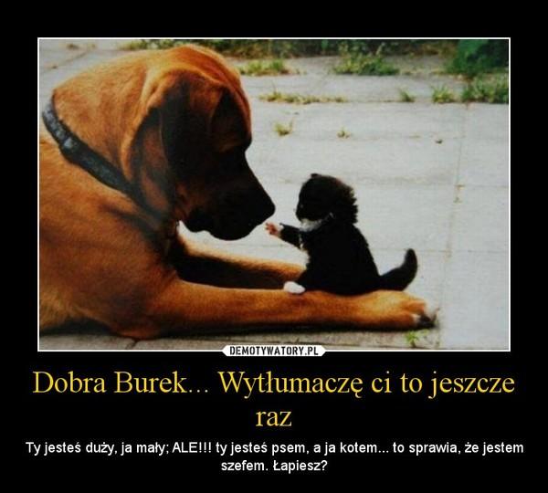 Dobra Burek... Wytłumaczę ci to jeszcze raz – Ty jesteś duży, ja mały; ALE!!! ty jesteś psem, a ja kotem... to sprawia, że jestem szefem. Łapiesz?