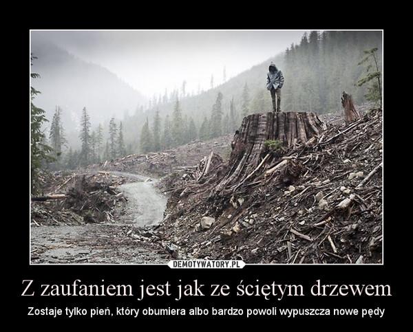 Z zaufaniem jest jak ze ściętym drzewem – Zostaje tylko pień, który obumiera albo bardzo powoli wypuszcza nowe pędy