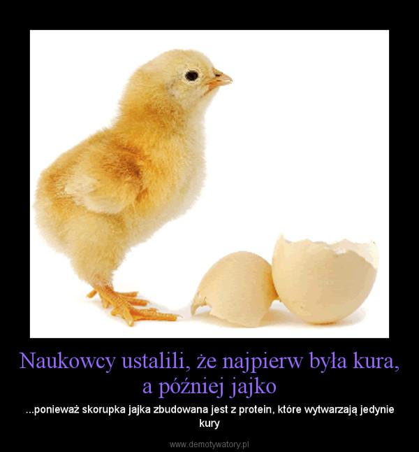 Naukowcy ustalili, że najpierw była kura, a później jajko – ...ponieważ skorupka jajka zbudowana jest z protein, które wytwarzają jedynie kury