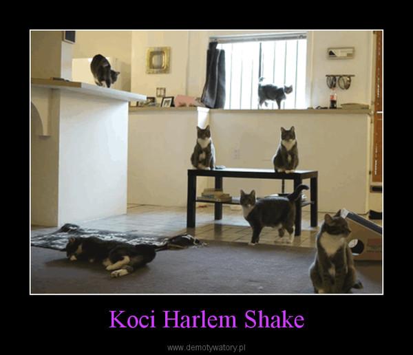 Koci Harlem Shake –
