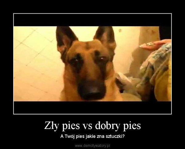 Zły pies vs dobry pies – A Twój pies jakie zna sztuczki?