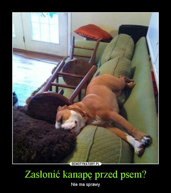 Zasłonić kanapę przed psem? – Nie ma sprawy