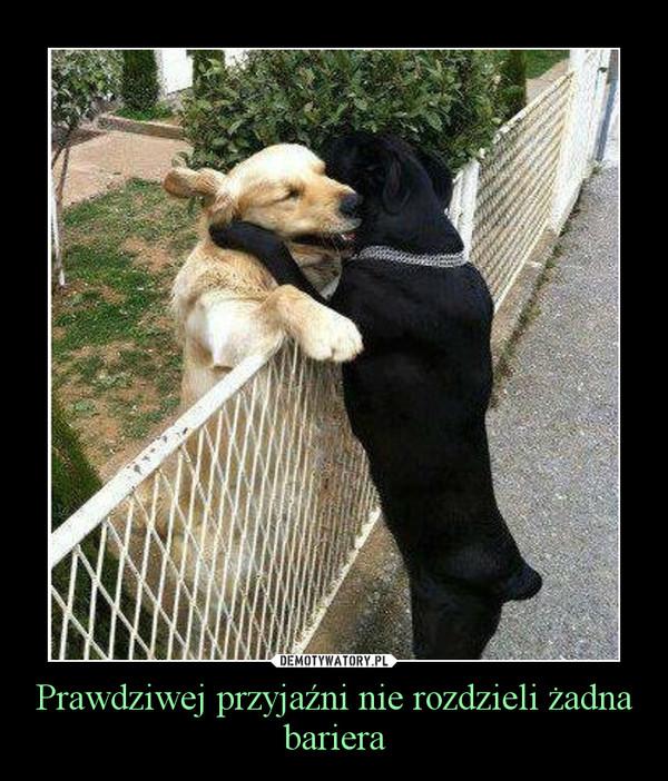 Prawdziwej przyjaźni nie rozdzieli żadna bariera –