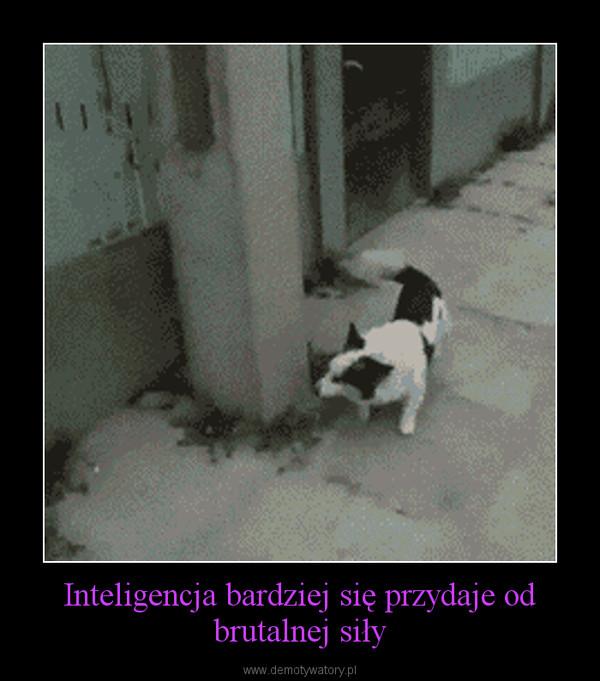 Inteligencja bardziej się przydaje od brutalnej siły –