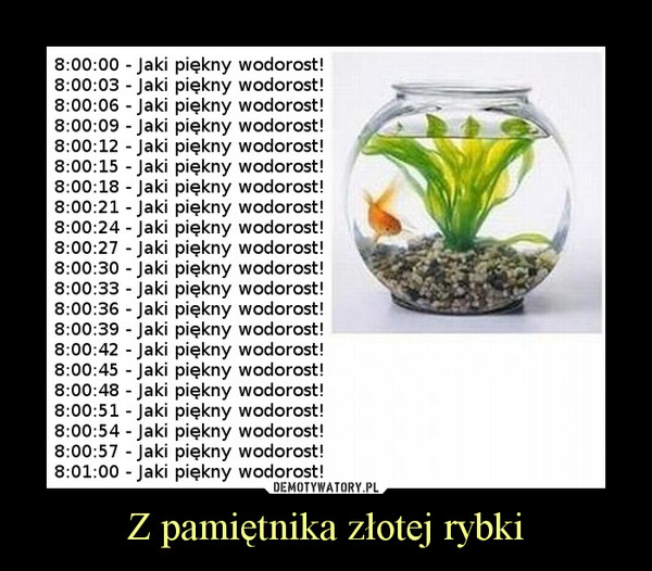 Z pamiętnika złotej rybki –