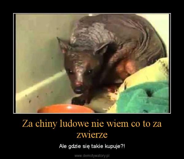 Za chiny ludowe nie wiem co to za zwierze – Ale gdzie się takie kupuje?!