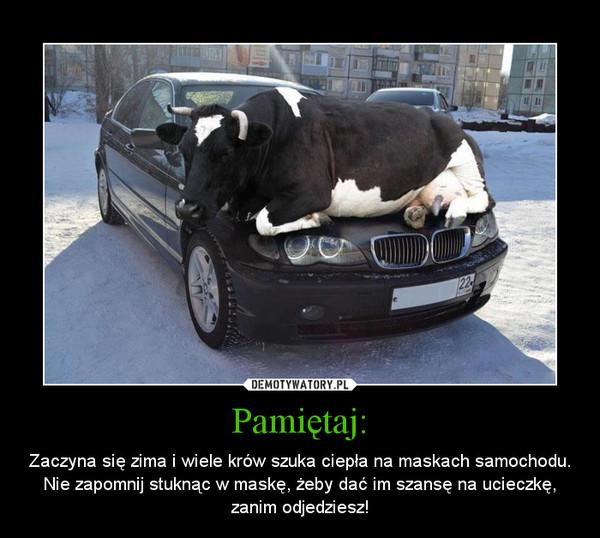 Pamiętaj: – Zaczyna się zima i wiele krów szuka ciepła na maskach samochodu. Nie zapomnij stuknąc w maskę, żeby dać im szansę na ucieczkę, zanim odjedziesz!