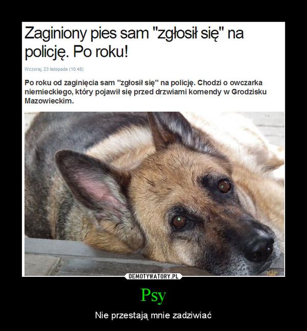 Psy – Nie przestają mnie zadziwiać