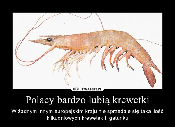 Polacy bardzo lubią krewetki – W żadnym innym europejskim kraju nie sprzedaje się taka ilość kilkudniowych krewetek II gatunku