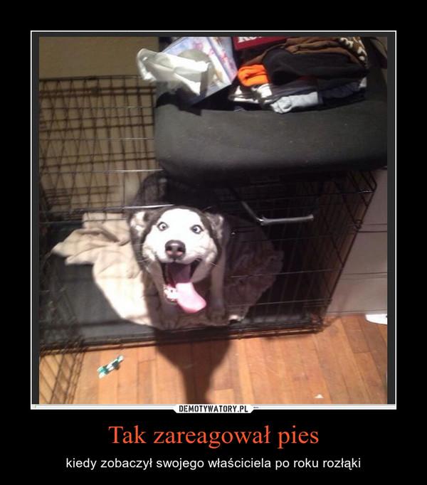Tak zareagował pies – kiedy zobaczył swojego właściciela po roku rozłąki