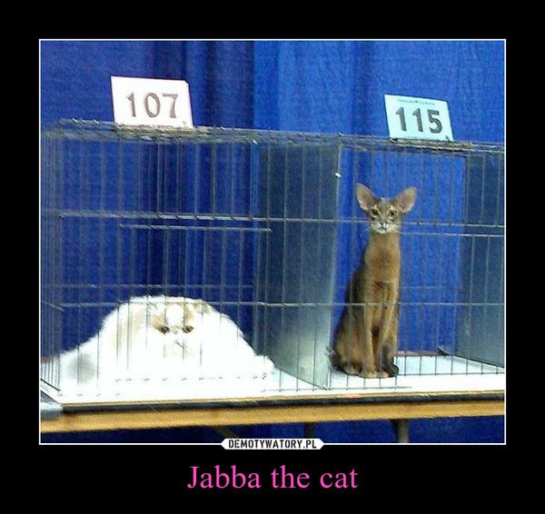 Jabba the cat –
