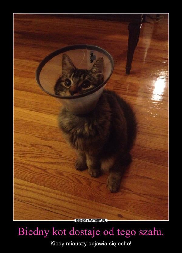 Biedny kot dostaje od tego szału. – Kiedy miauczy pojawia się echo!