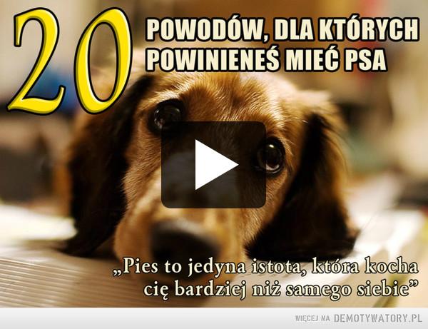 20 dowodów na to, że powinieneś mieć psa –