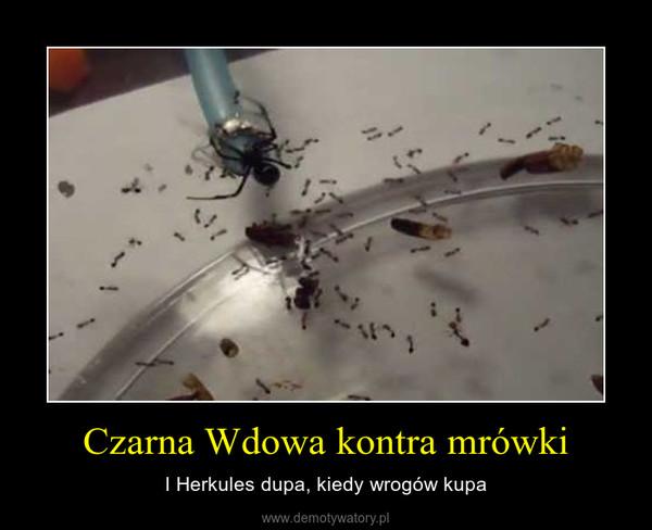 Czarna Wdowa kontra mrówki – I Herkules dupa, kiedy wrogów kupa