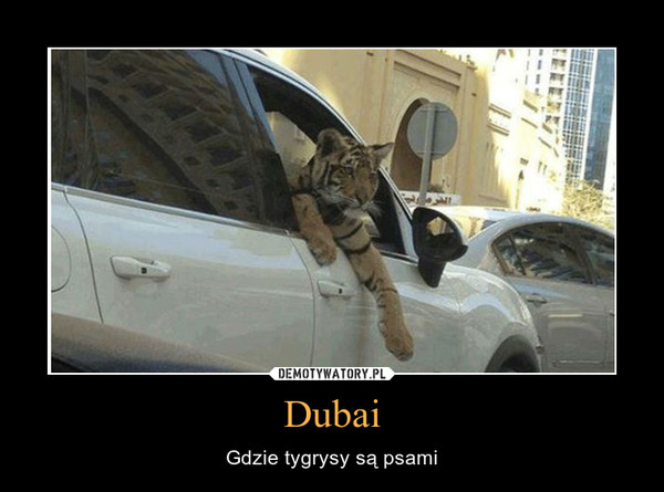 Dubai – Gdzie tygrysy są psami