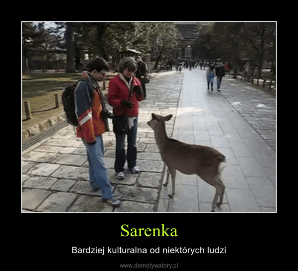 Sarenka – Bardziej kulturalna od niektórych ludzi