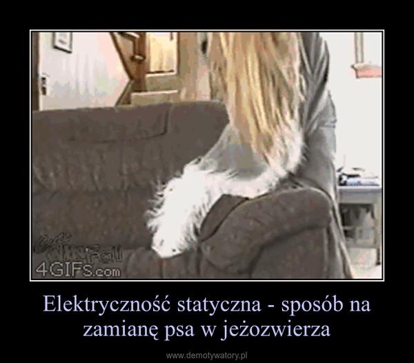 Elektryczność statyczna - sposób na zamianę psa w jeżozwierza –
