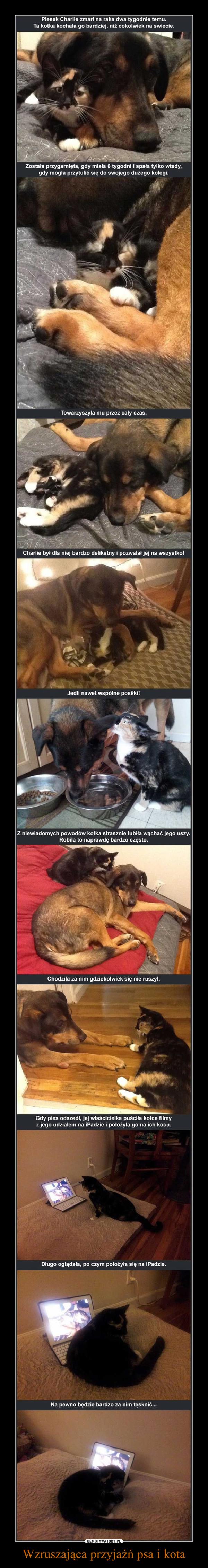 Wzruszająca przyjaźń psa i kota –