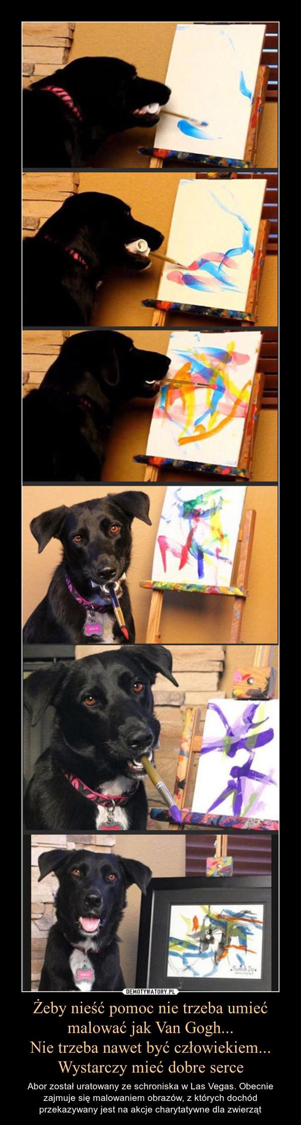Żeby nieść pomoc nie trzeba umieć malować jak Van Gogh...Nie trzeba nawet być człowiekiem...Wystarczy mieć dobre serce – Abor został uratowany ze schroniska w Las Vegas. Obecnie zajmuje się malowaniem obrazów, z których dochód przekazywany jest na akcje charytatywne dla zwierząt