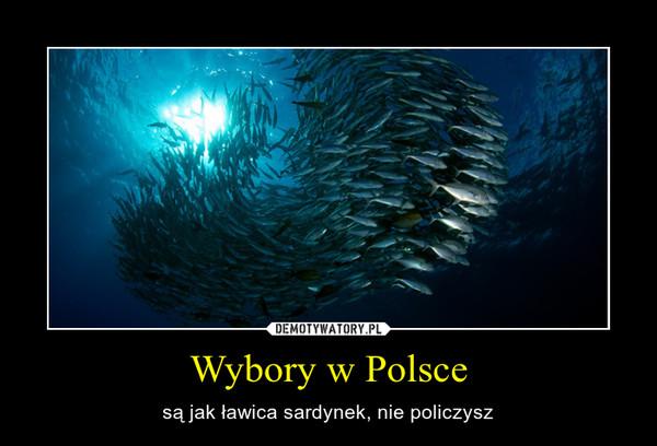 Wybory w Polsce – są jak ławica sardynek, nie policzysz