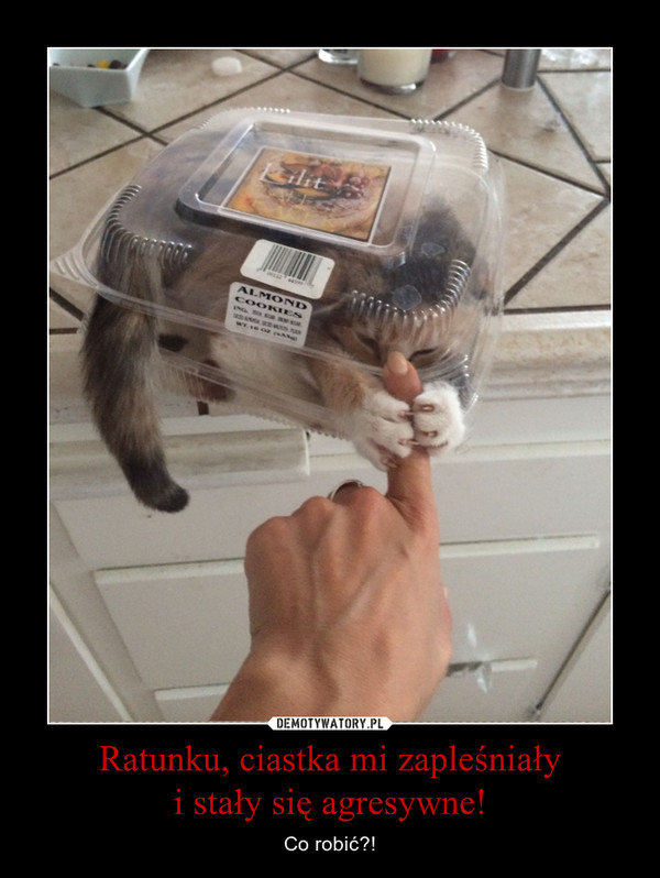 Ratunku, ciastka mi zapleśniałyi stały się agresywne! – Co robić?!