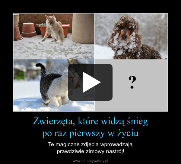 Zwierzęta, które widzą śniegpo raz pierwszy w życiu – Te magiczne zdjęcia wprowadzająprawdziwie zimowy nastrój!