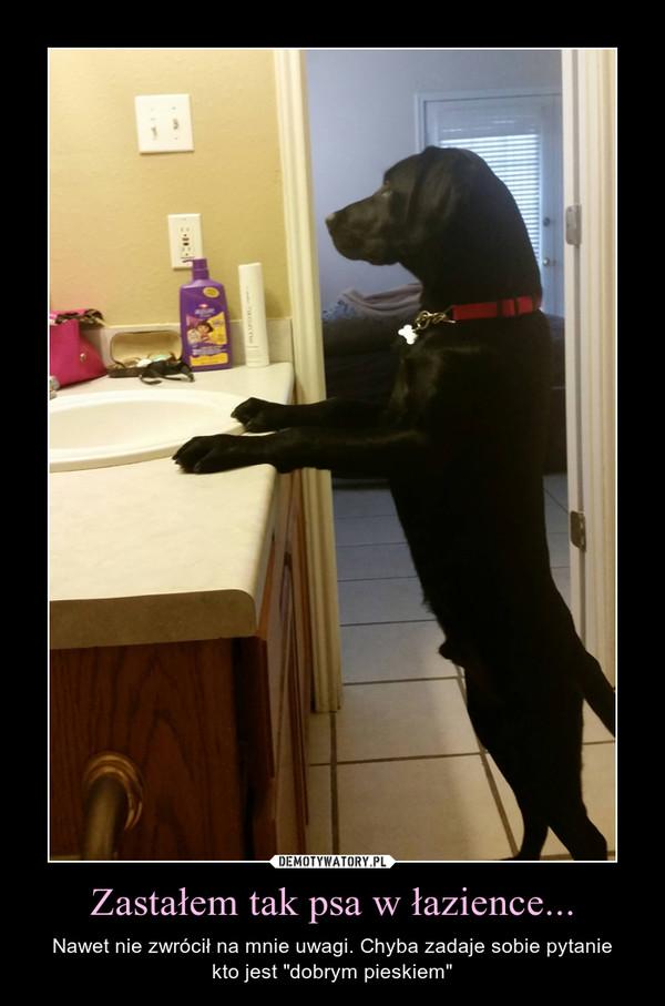 """Zastałem tak psa w łazience... – Nawet nie zwrócił na mnie uwagi. Chyba zadaje sobie pytaniekto jest """"dobrym pieskiem"""""""