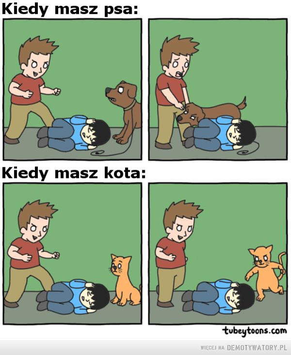 Pies vs. Kot –