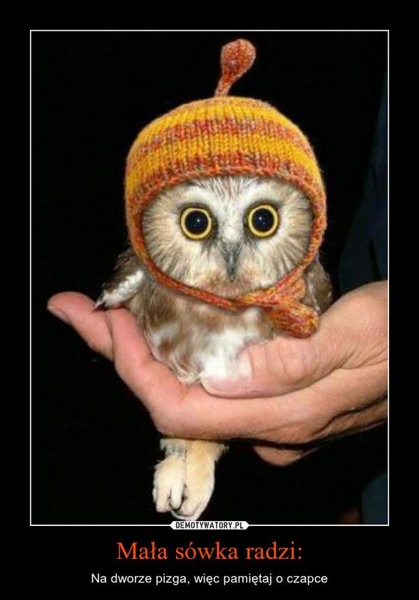 Mała sówka radzi: – Na dworze pizga, więc pamiętaj o czapce