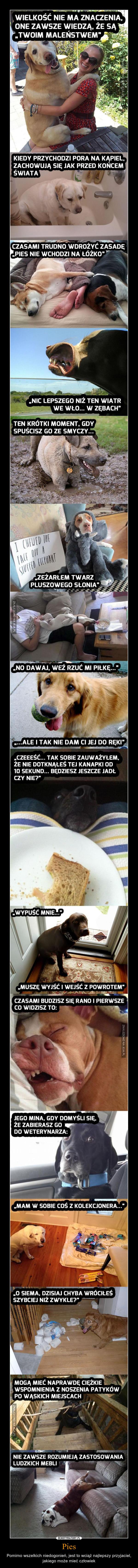Pies – Pomimo wszelkich niedogonień, jest to wciąż najlepszy przyjaciel, jakiego może mieć człowiek
