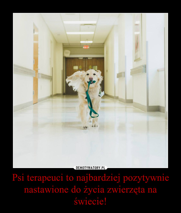 Psi terapeuci to najbardziej pozytywnie nastawione do życia zwierzęta na świecie! –