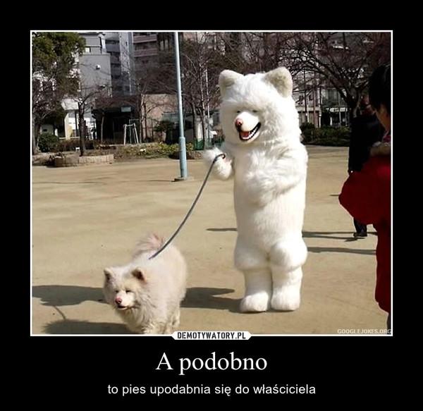 A podobno – to pies upodabnia się do właściciela
