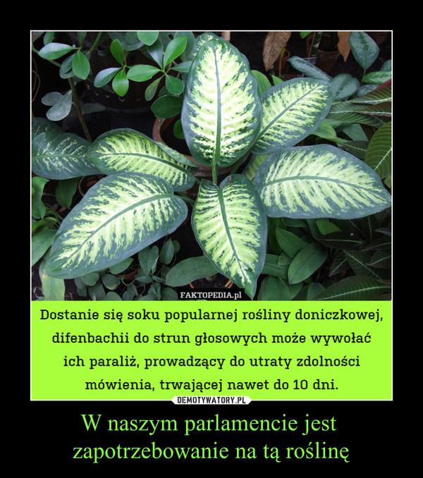 W naszym parlamencie jest  zapotrzebowanie na tą roślinę –  Dostanie się soku popularnej rośliny doniczkowej, difenbachii do strun głosowych może wywołaćich paraliż, prowadzący do utraty zdolności mówienia, trwającej nawet do 10 dni.