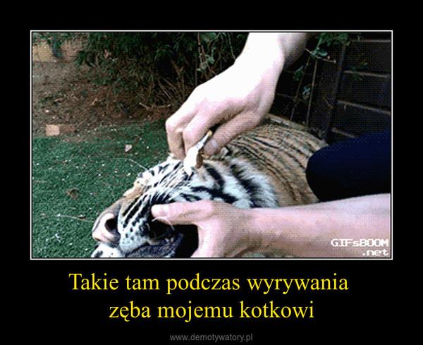 Takie tam podczas wyrywania zęba mojemu kotkowi –