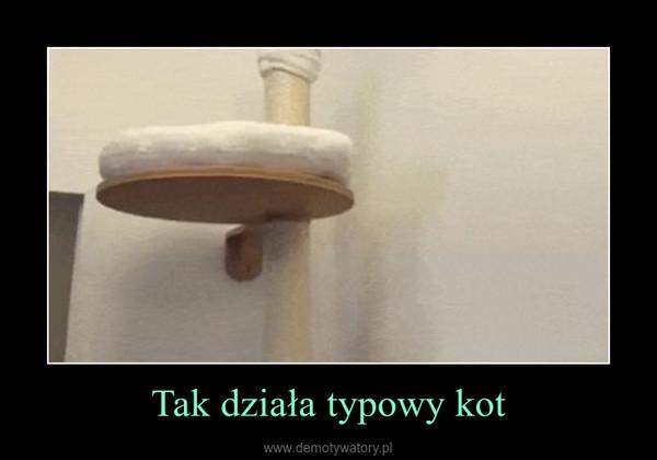Tak działa typowy kot –