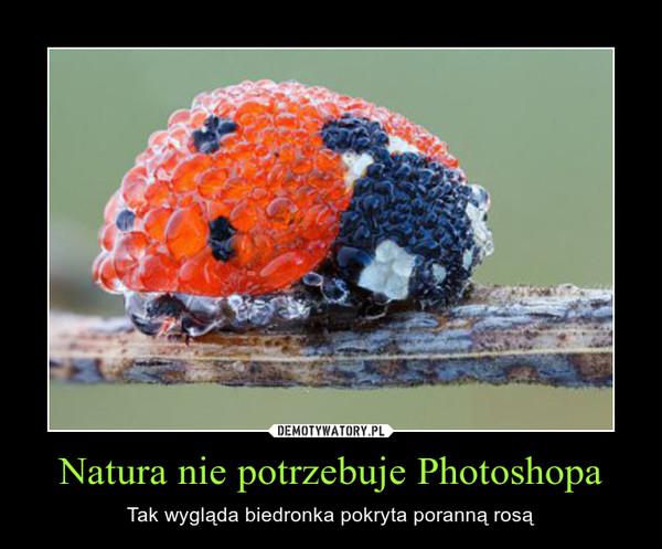 Natura nie potrzebuje Photoshopa – Tak wygląda biedronka pokryta poranną rosą
