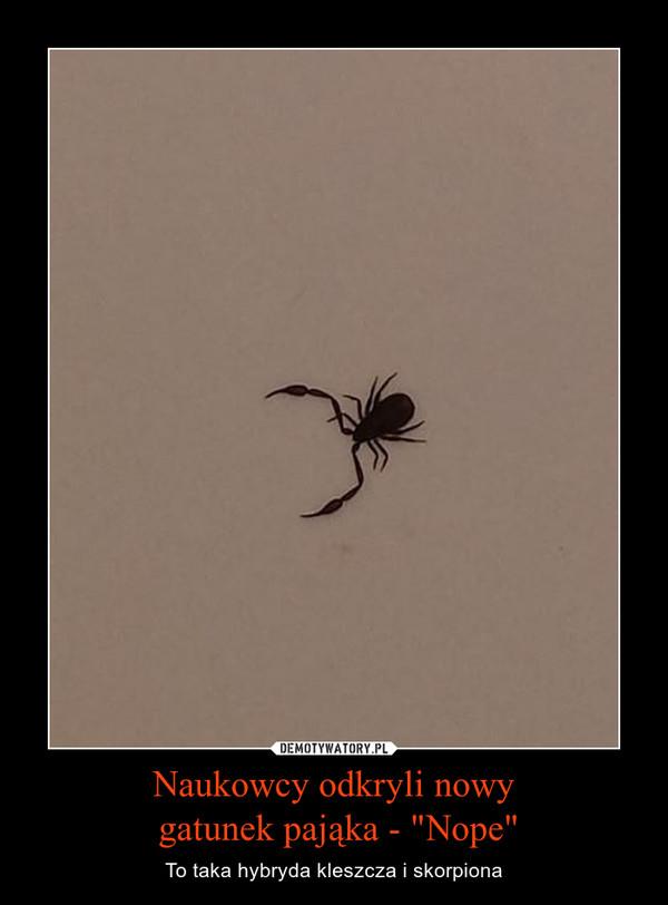 """Naukowcy odkryli nowy gatunek pająka - """"Nope"""" – To taka hybryda kleszcza i skorpiona"""