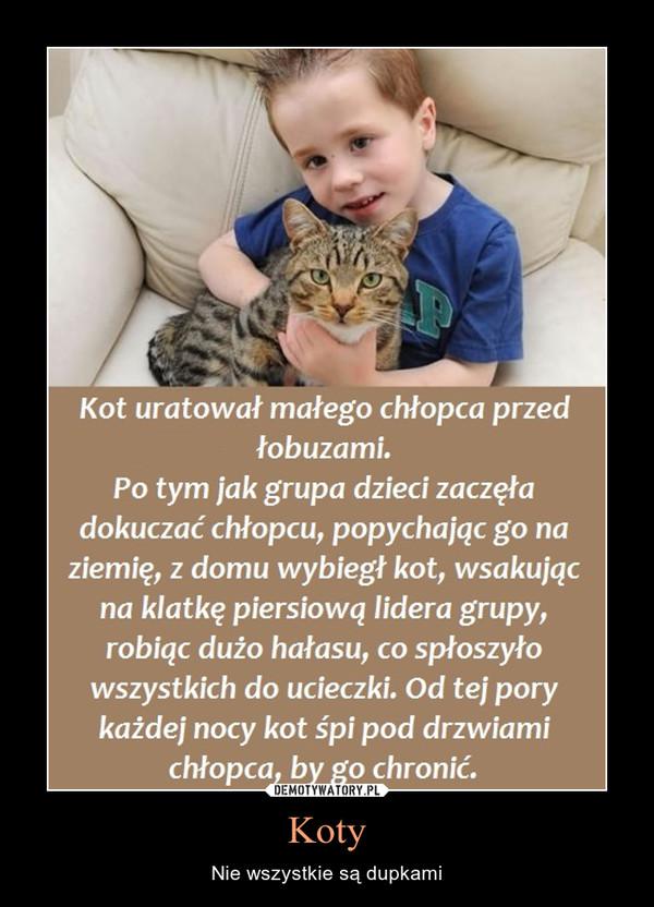 Koty – Nie wszystkie są dupkami