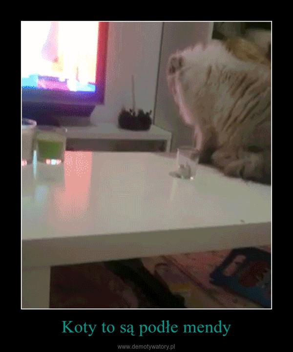 Koty to są podłe mendy –