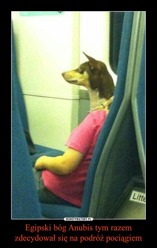 Egipski bóg Anubis tym razem zdecydował się na podróż pociągiem –