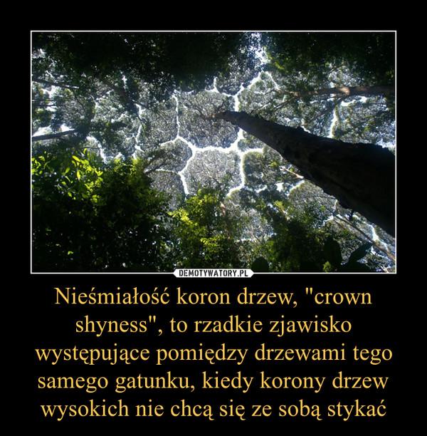 """Nieśmiałość koron drzew, """"crown shyness"""", to rzadkie zjawisko występujące pomiędzy drzewami tego samego gatunku, kiedy korony drzew wysokich nie chcą się ze sobą stykać –"""