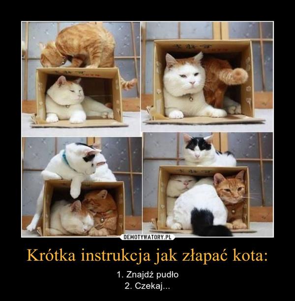 Krótka instrukcja jak złapać kota: – 1. Znajdź pudło2. Czekaj...